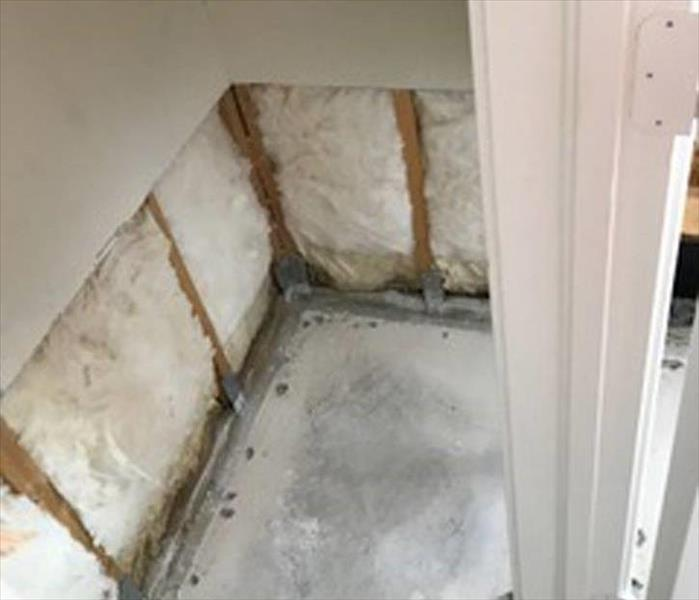 Dallas Mold Removal