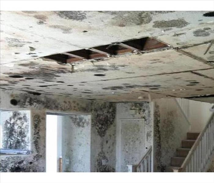 Vacant House in Preston Hollow and Mold Damage