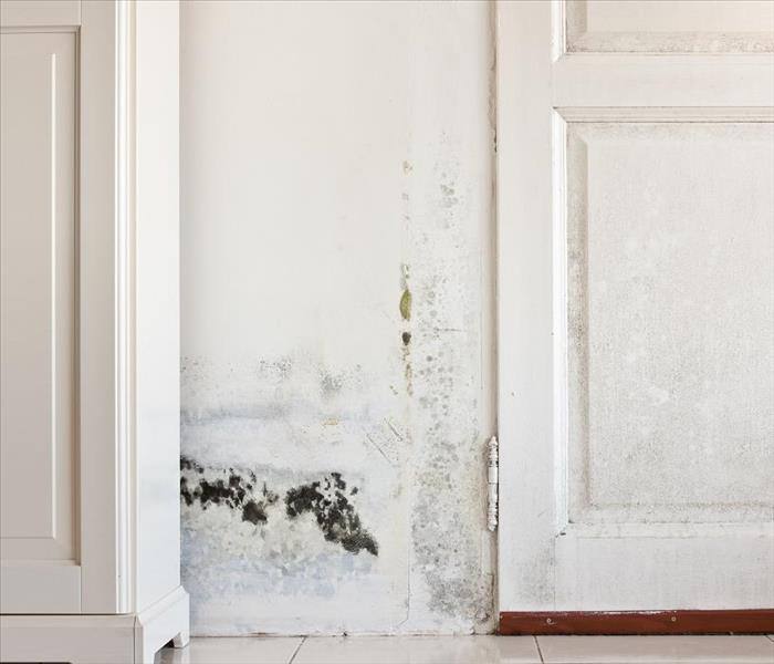 Mold Remediation Mold Causes Real Damage in Northwest Dallas