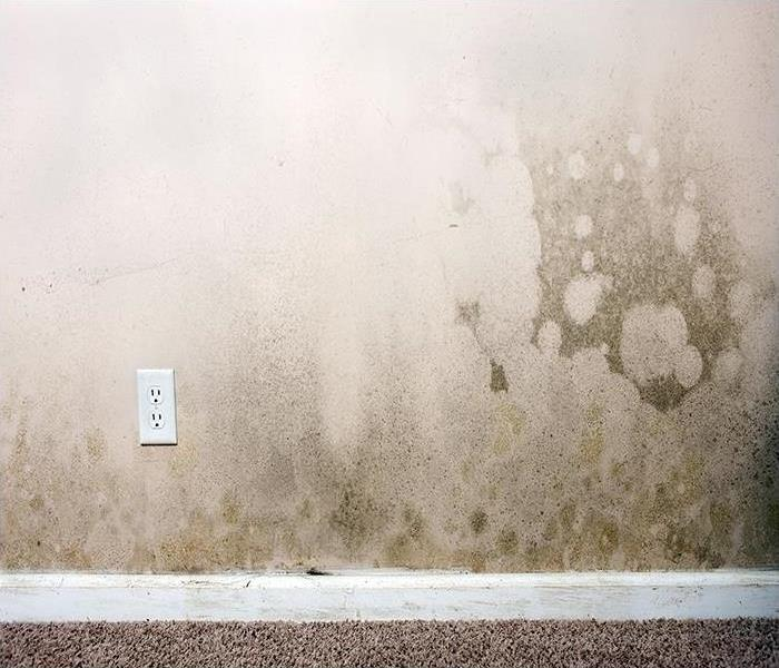 Mold Remediation We Are The Best At Identifying Mold And Restoring Your Dallas Home