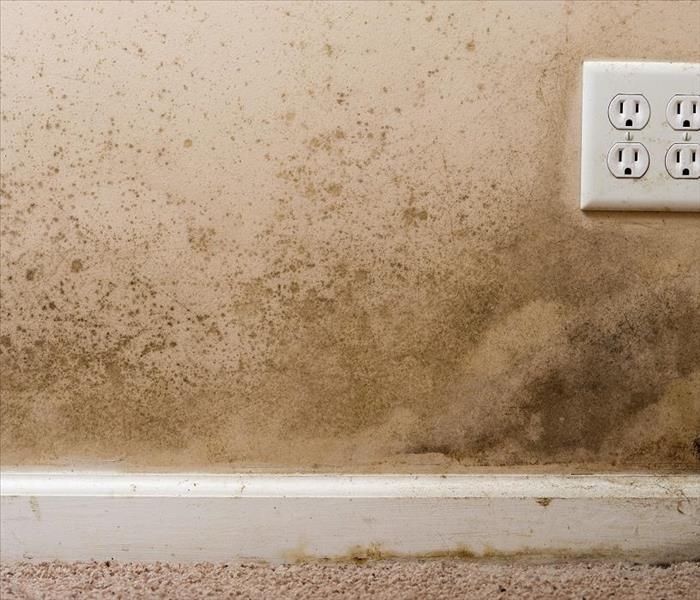 Mold Remediation SERVPRO Stopping Mold Damage in Dallas Homes