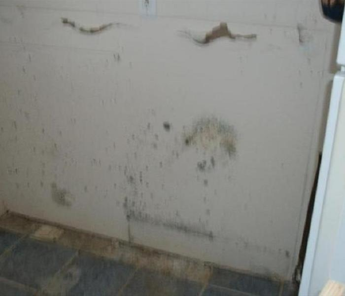 Mold Remediation Mold Remediation Tips for Lancaster