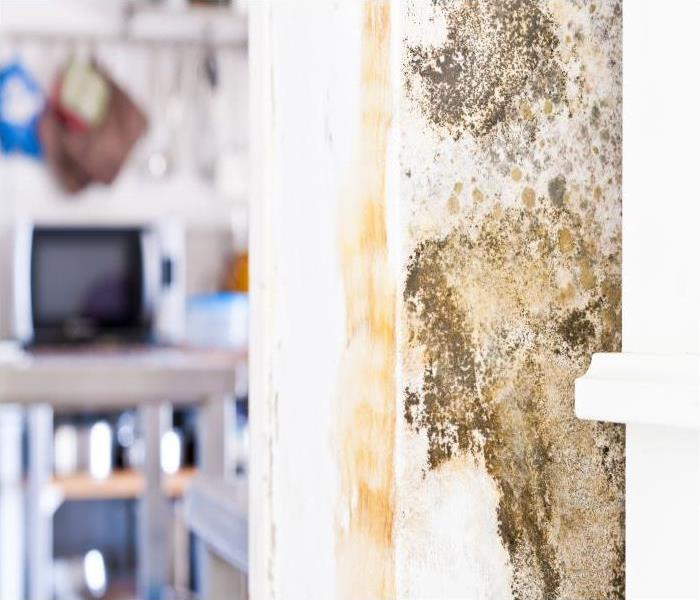 Mold Remediation How Our SERVPRO Experts Eliminate Mold In Your Dallas Home