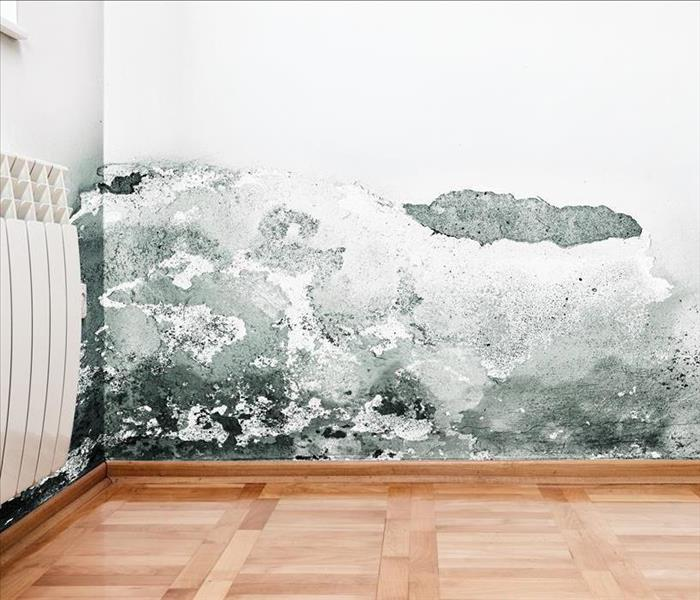 Mold Remediation  Complete Mold Damage Remediation Services In Dallas
